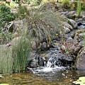 Calming Pond by Liz Santie