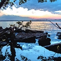Caloosahatchee Mangroves by Michael Frizzell
