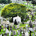 Calvary Cemetery From Above by Jack Riordan