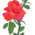 Calypso Rose by Anne Norskog