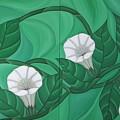 Calystgia Sepium  by Marinella Owens