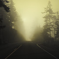 Camano Island Fog by Tim Nyberg