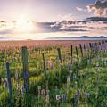 Camas Marsh 3 by Leland D Howard
