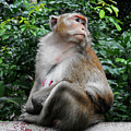 Cambodia Monkeys 2 by Ron Kandt