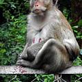 Cambodia Monkeys 3 by Ron Kandt
