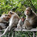 Cambodia Monkeys 5 by Ron Kandt