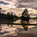 Cambodian Countryside Rice Fields Reflection by Mike Reid