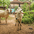 Cambodian Village by Werner Padarin