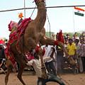 Camel Dance Pushkar by Doug Matthews