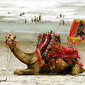 Camel For Ride  by Shahzad Hamid