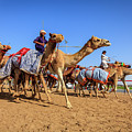 Camel Racing In Dubai by Alexey Stiop