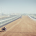 Camel Racing Track In Dubai by Alexey Stiop