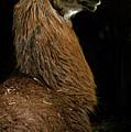 Camelid 1 by Catherine Sobredo