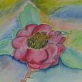 Camellia by Mark E Smith
