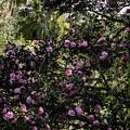 Camellia Tree by Zina Stromberg