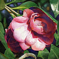 Camellianne by Andrew King