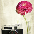 Camera And Flowers by Darren Fisher