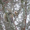 Camera Shy Grey Squirrel by Stephanie Forrer-Harbridge