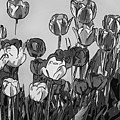 Camille's Tulips - Version 4 by Steve Harrington