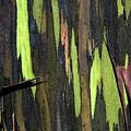 Camouflage by Carl Ellis