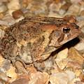 Camouflage Toad by Brett Winn