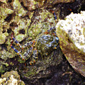 Camouflaged Crab by Kylee S