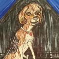 Camp Beagle by Geraldine Myszenski