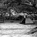 Camp Under Live Oaks by Daniel Reed