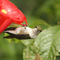 Can I Help You Hummingbird  by Cathy Beharriell