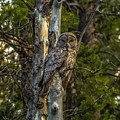 Can You See Me? by Yeates Photography