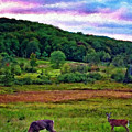 Canaan Valley Evening Impasto by Steve Harrington