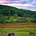 Canaan Valley Evening by Steve Harrington