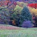 Canaan Valley In Vivid by Roberta Kayne