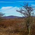 Canaan Valley West Virginia by Alex Grichenko
