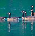 Canada Geese 2 by Brian Stevens