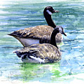 Canada Geese by John D Benson