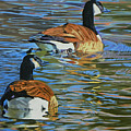 Canada Geese by Kenneth Young