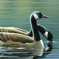 Canada Geese by Mark Mittlesteadt