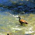 Wildlife Scenes #3 by Jarryl Bhagwat