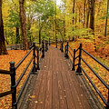 Canadian Autumnal Walkway by Clive Littin