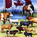 Canadian Beef Breeds by Kurt Hafso