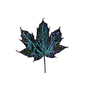 Canadian Diversity Maple Leaf by Marlin and Laura Hum