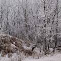 Canadian Ice Fog  by Joanne Smoley