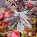 Canadian Leaf by Gayle Miller
