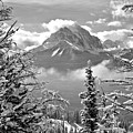 Canadian Rockies Through The Snow Covered Trees Black And White by Adam Jewell