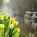 Canalside Daffodils by Geoff Smith