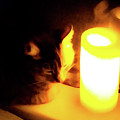 Candlelight by Lisa Quenon