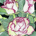 Candy Cane Roses by Alexis Grone
