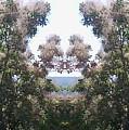Candy Floss Greek Bush by Julia Woodman