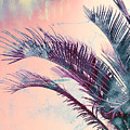 Candy Palms by Emanuela Carratoni